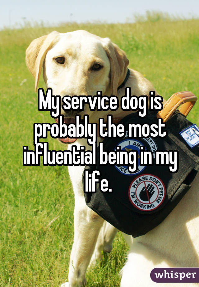 My service dog is probably the most influential being in my life.