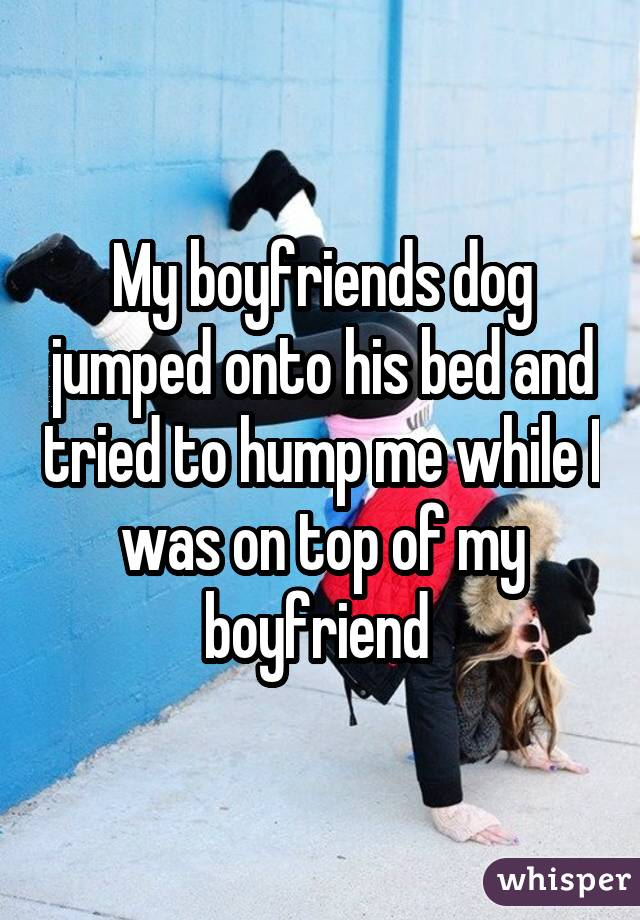 My boyfriends dog jumped onto his bed and tried to hump me while I was on top of my boyfriend