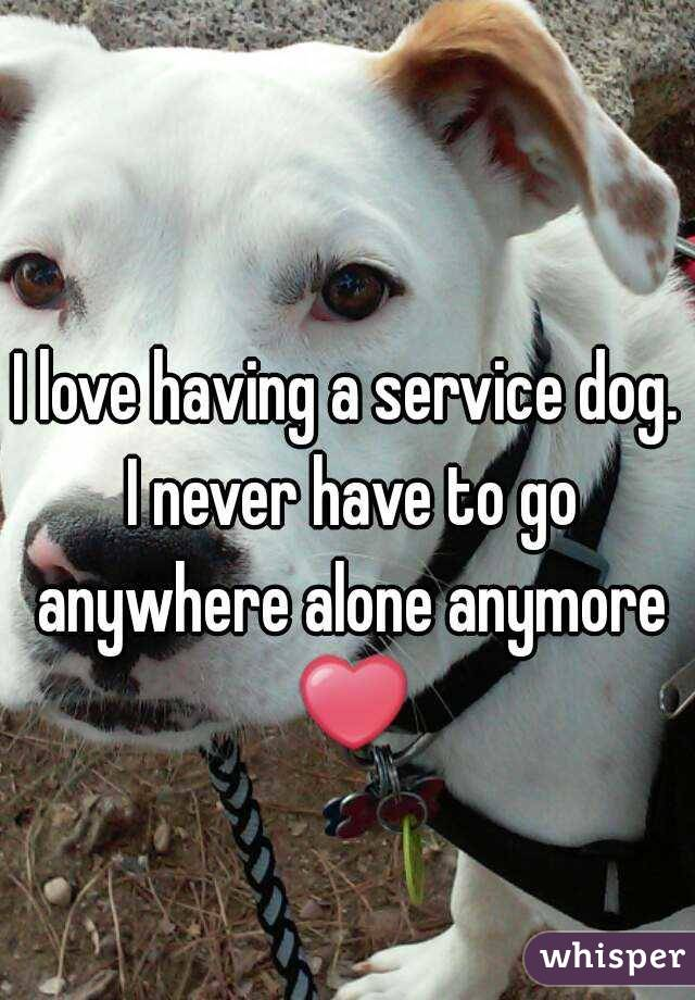 I love having a service dog. I never have to go anywhere alone anymore ❤