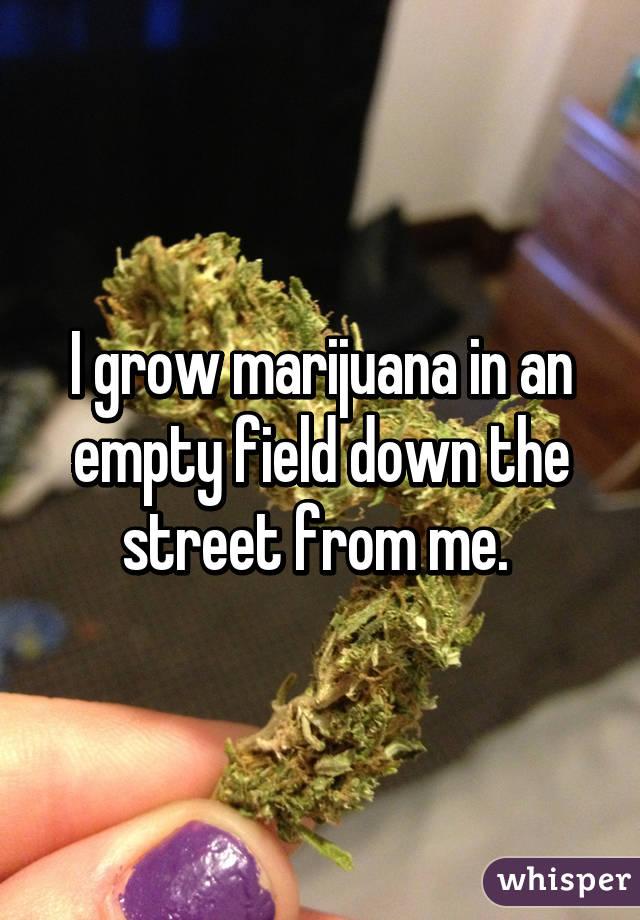 051e37ffca9136a3b8d5bdd1ef2b29549ebee3 wm 10 Awesome Confessions From People Who Grow Marijuana