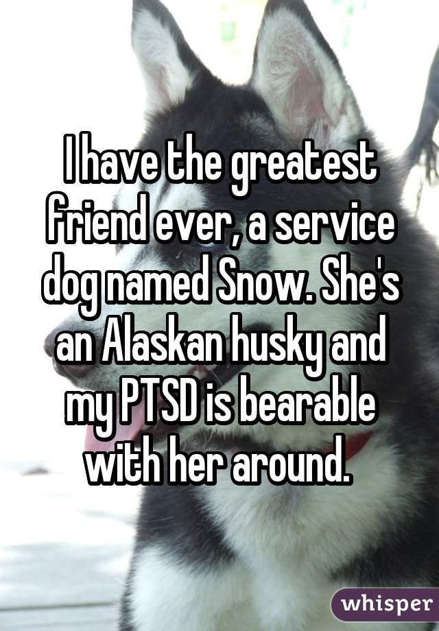 I have the greatest friend ever, a service dog named Snow. She's an Alaskan husky and my PTSD is bearable with her around.