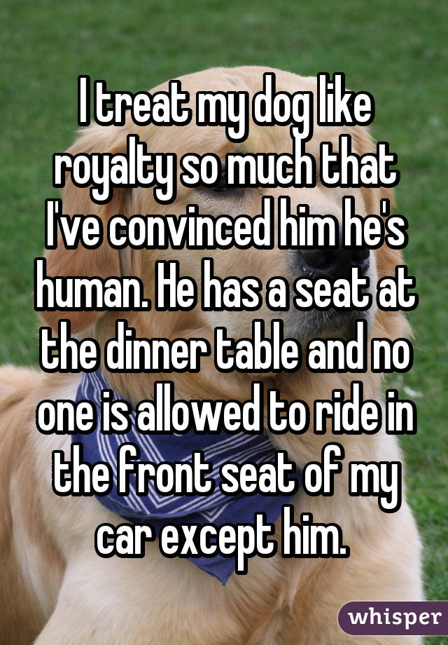 I treat my dog like royalty so much that I've convinced him he's human. He has a seat at the dinner table and no one is allowed to ride in the front seat of my car except him.